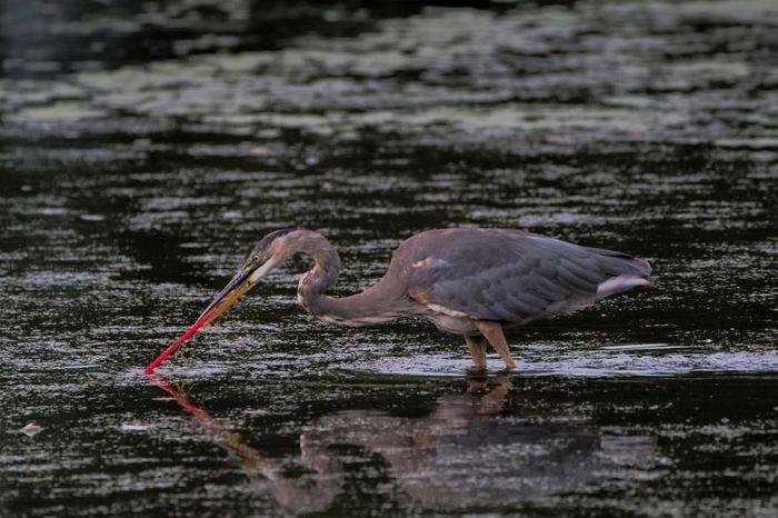 13 Inquinamento plastica National Geographic