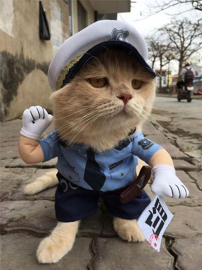 13 gatto travestito