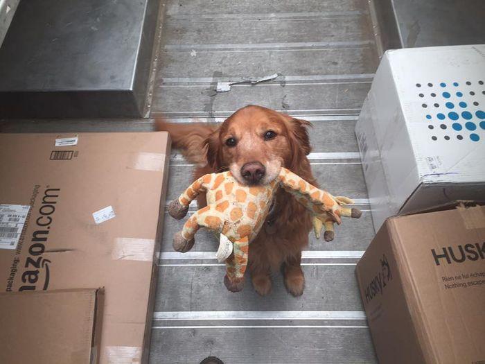 13 operazione UPS dog