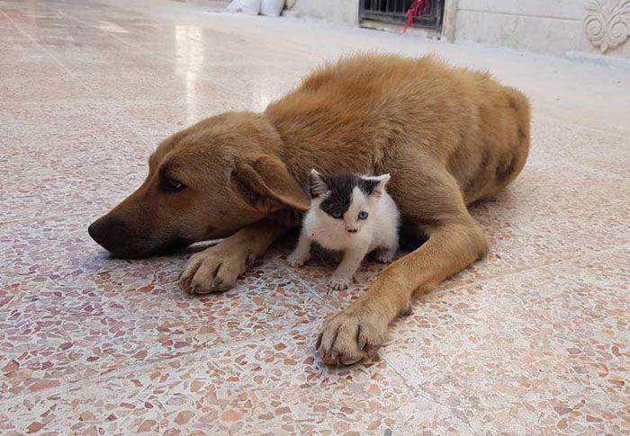 14 Da Aleppo una storia commovente tra un gattino e un cane