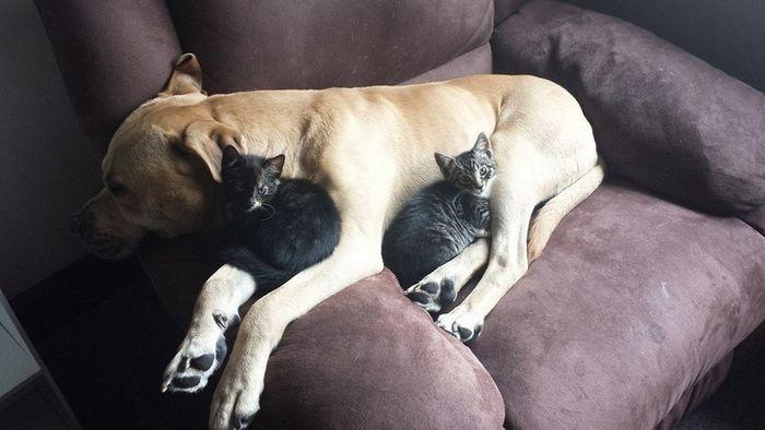 14 Gatti che dormono sui cani