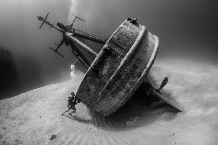 14 Gli scatti più belli dell' Underwater Photographer of the Year 2018