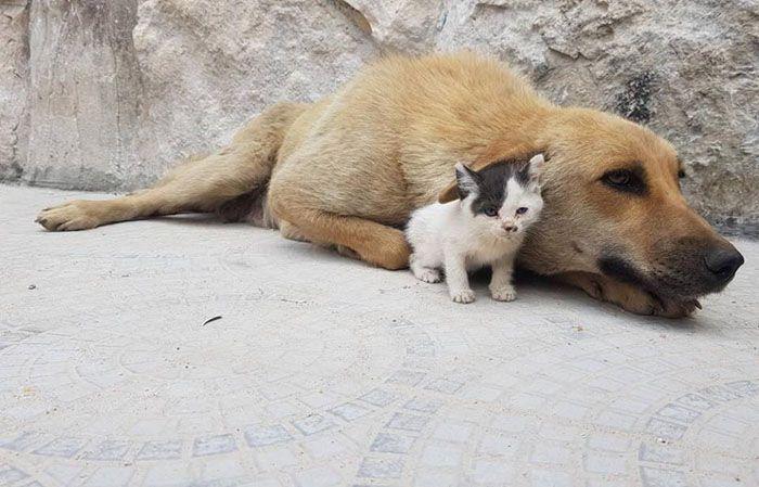 15 Da Aleppo una storia commovente tra un gattino e un cane