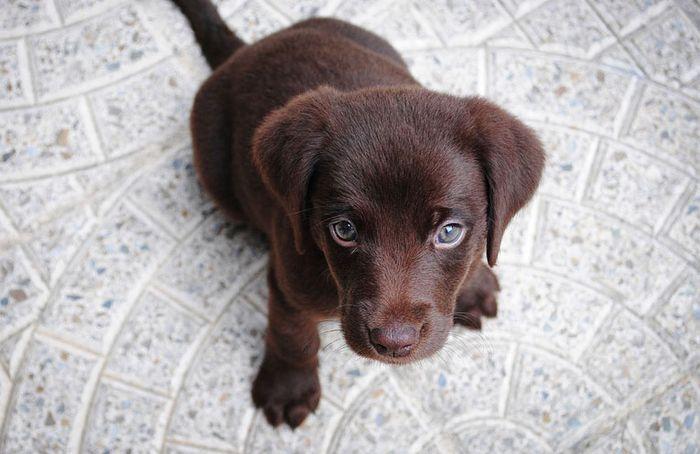 15 Perché siamo così attratti dai cuccioli