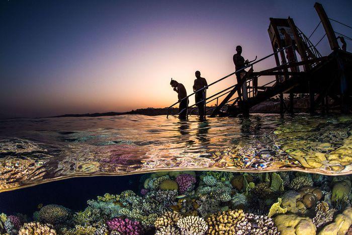 17 Gli scatti più belli dell' Underwater Photographer of the Year 2018