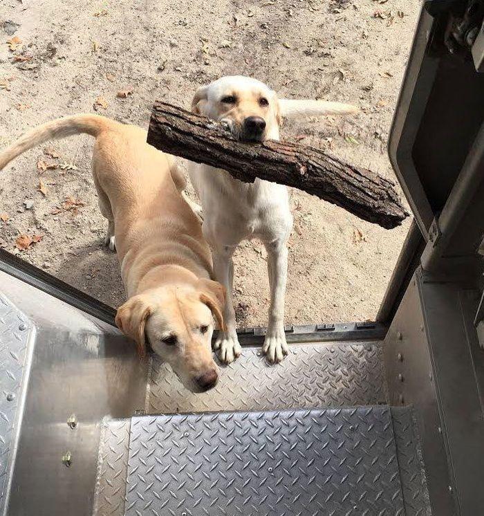 17 operazione UPS dog