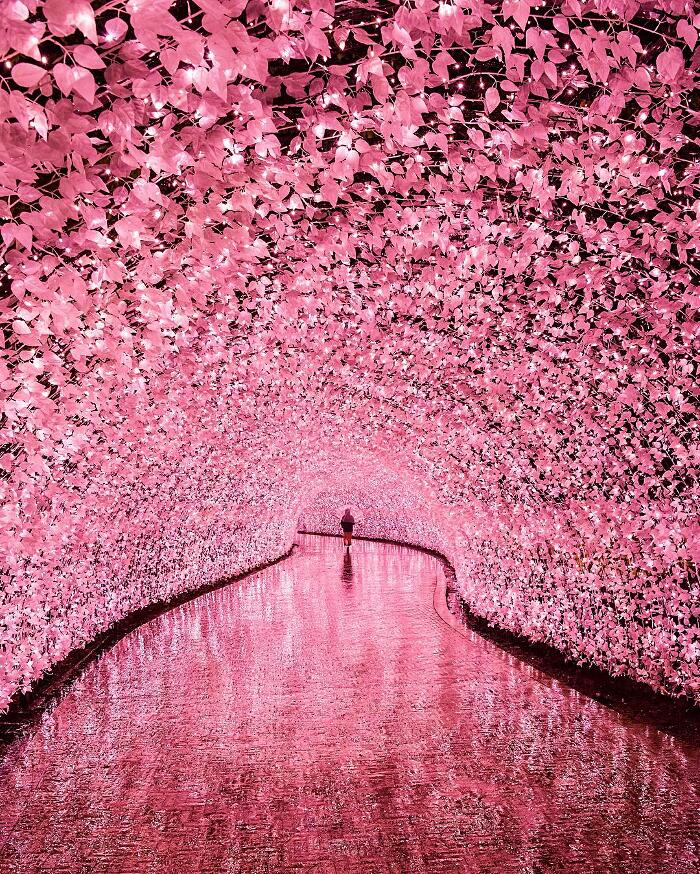 02 tunnel di led colorati a Nabana no Sato in Giappone