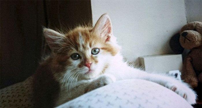 03 Si chiama Rubble ed è il gatto più anziano della Gran Bretagna