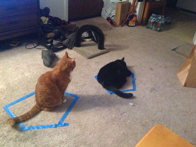 06 Perché i gatti entrano dentro i cerchi