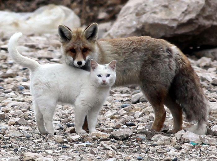 Amicizie impossibili tra animali ovvero i rapporti interspecifici