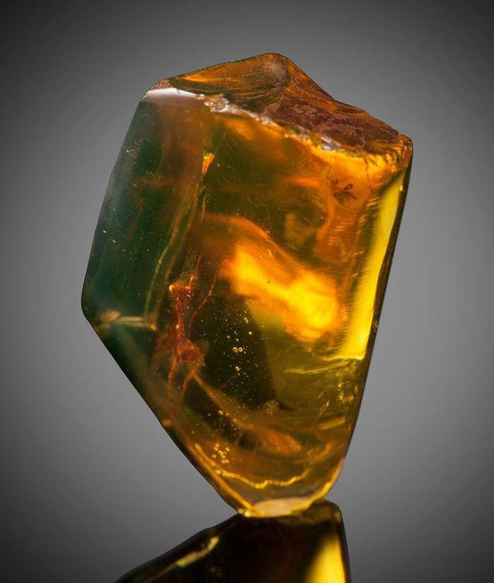 Mantide religiosa di 12 milioni di anni fa