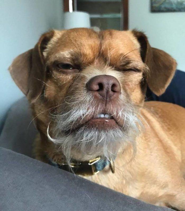 Bacon il cane dal volto umano e dalle mille espressioni