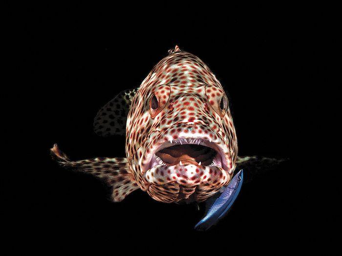 Le foto dei vincitori del concorso di fotografia subacquea della rivista Scuba Diving 2018