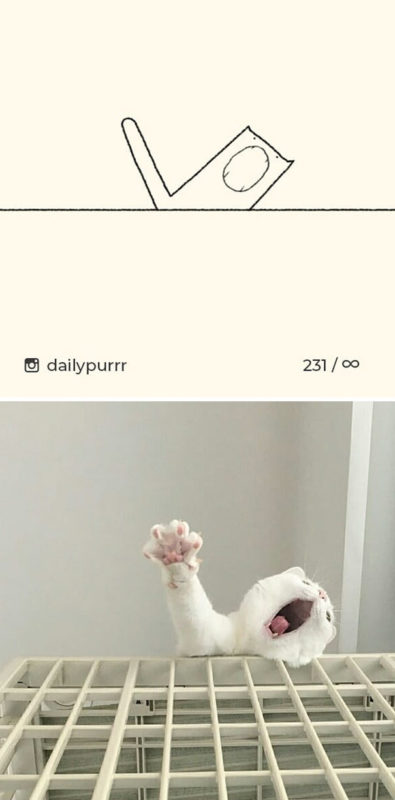 Immagini stilizzate delle pose più divertenti di gatti nei disegni di Ainars