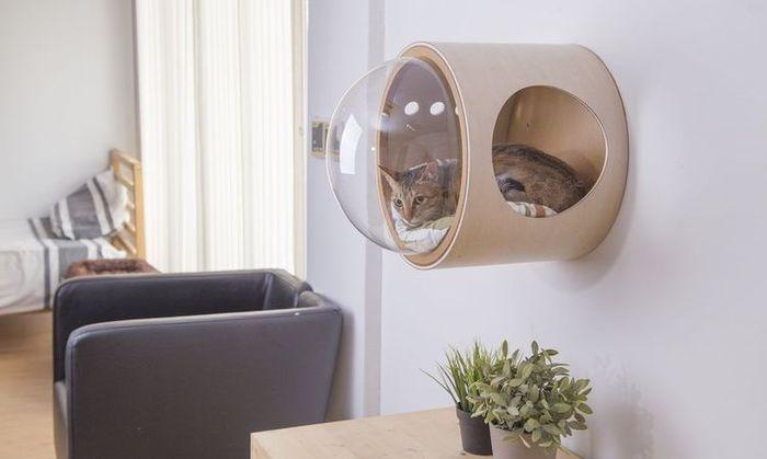 cuccia spaziale per gatti