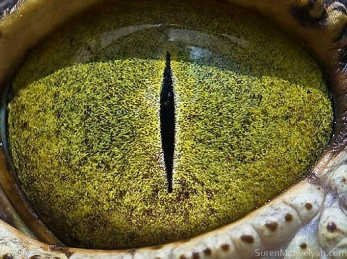 Occhi grandi 04