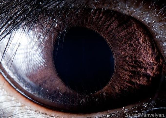 Occhi grandi 07