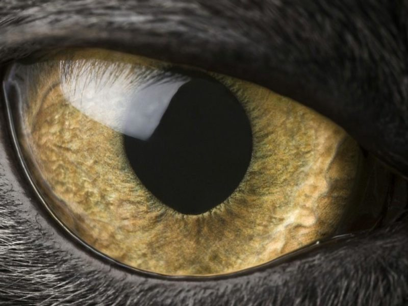 Tutti i colori degli occhi