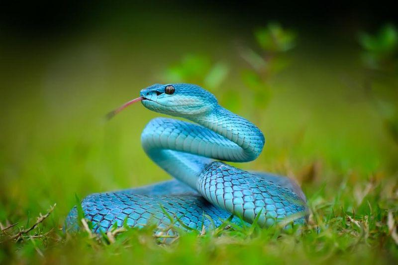 Serpenti impressionanti