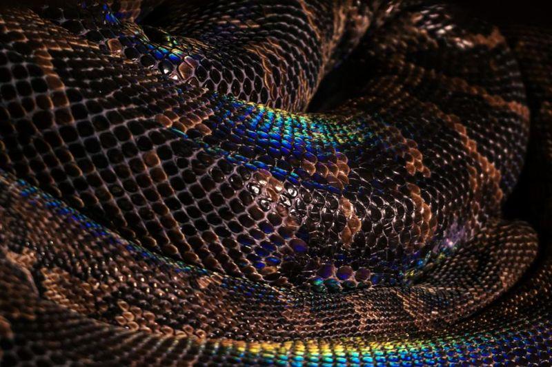 I serpenti più impressionanti