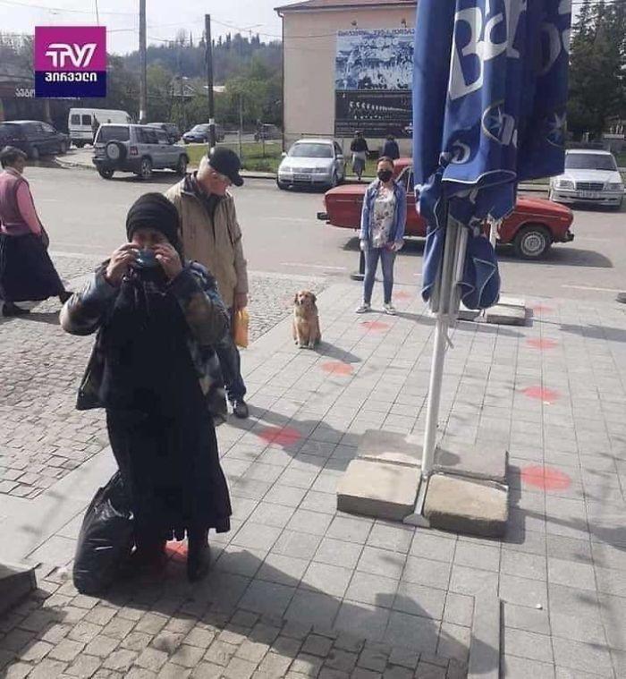 Foto divertenti di animali cane in fila che aspetta il turno