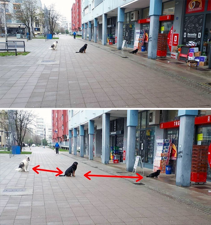 Foto divertenti di animali cani a distanza di sicurezza
