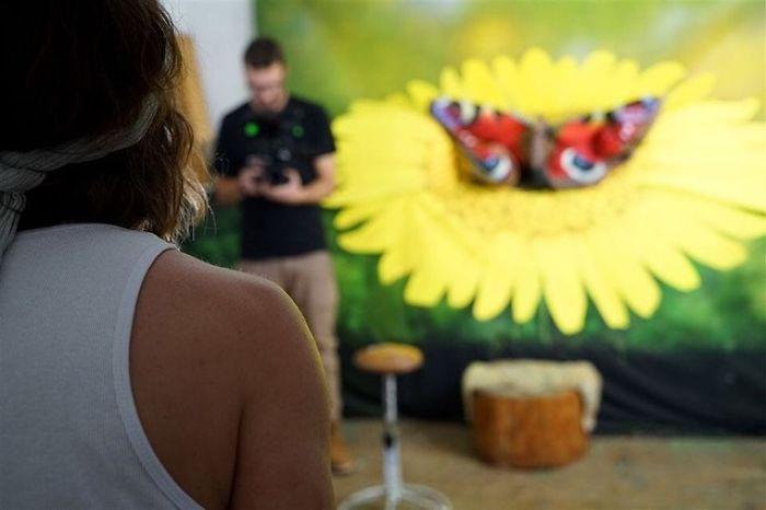Farfalla su girasole Johannes Stötter