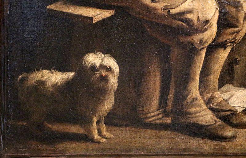 Il cane maltese origini