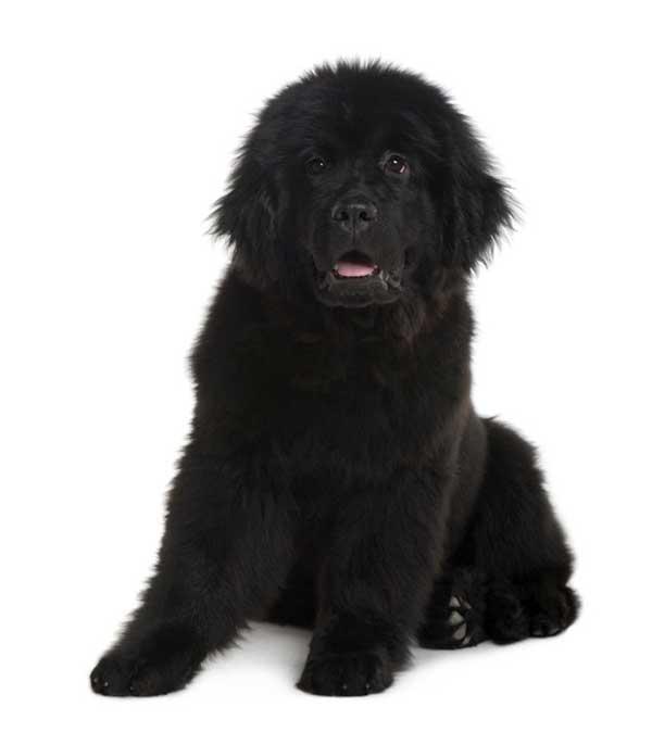 cane cucciolo seduto