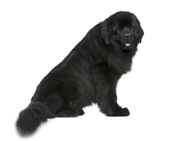cane nero seduto di fianco