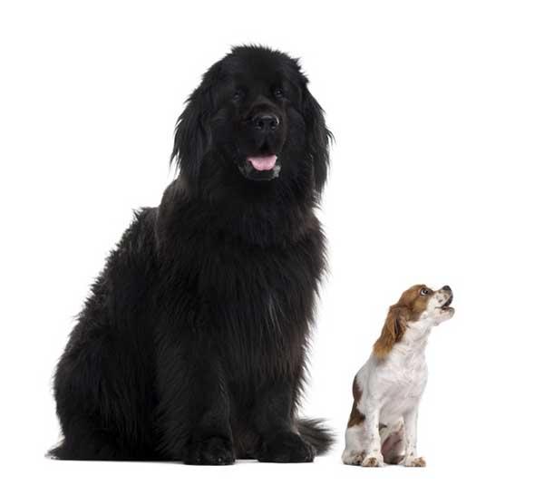 cane con piccolo cane a fianco