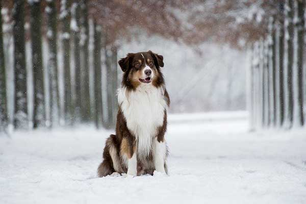 sulla neve