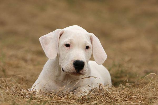 Cucciolo cane bianco seduto