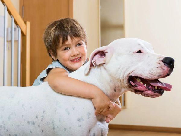 Dogo argentino con bambino