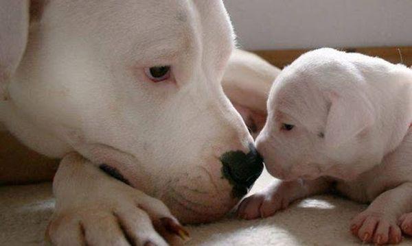 Cucciolo con madre