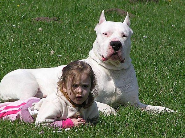 Cane con bambina